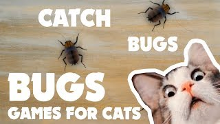 CAT GAMES ★ BUGS on the screen  ★ games for cats