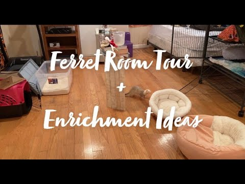 , title : 'Ferret Room Tour + 5 Enrichment Ideas