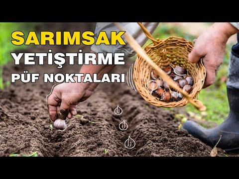 , title : 'Evde Sarımsak Nasıl Yetiştirilir? Bahçeye Sarımsak Nasıl Ekilir? How to Plant Garlic!