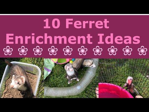 , title : '10 Ferret Enrichment Ideas