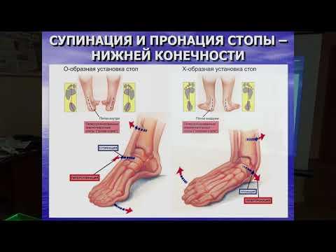 Лекция В. И. Нечаева «Ортезы стопы. Концепции ортезирования»