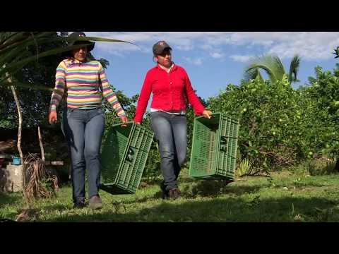 Agricultura al Día - La agricultura tropical en los cultivos de cítricos