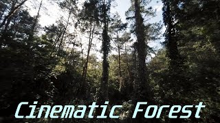Cinematic Forest || FPV || Reelsteady GO
