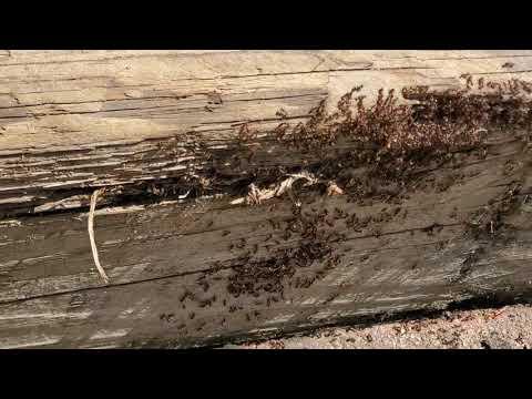 Massive Ant Colony Found in Railroad Ties in Colts Neck, NJ