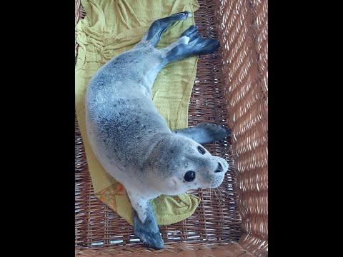 Petition: Tierärzten muss es erlaubt sein, verletzte und kranke Robben zu retten!