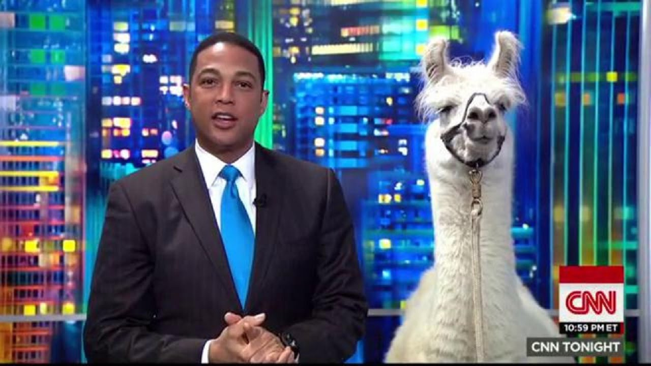 Why Does The Media Care So Much About Llamas? thumbnail