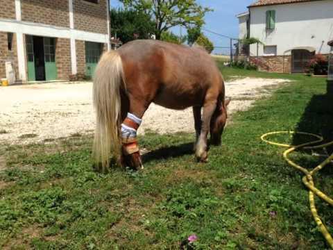 Glenohumeral deformità articolare dopo la frattura