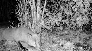 Wildlife Trail Camera - 15.1.2019