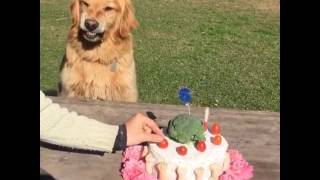 Don't touch my birthday cake
