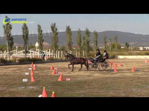 Campeonato navarro de enganches Olite 2017 4