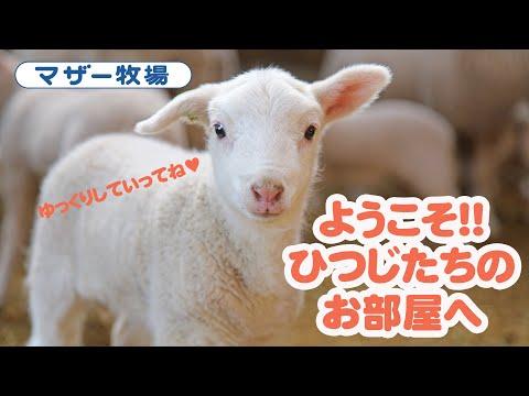 ようこそ!!羊たちのお部屋へ!