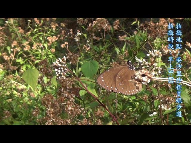 <html> <body> Film for Purple Butterfly2020-1-4 </body> </html>