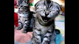 Funniest Sneezing Animals Compilation Ever
