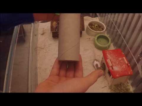 Das Boracidum von gribkow der Nägel