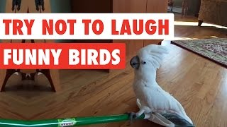 Try Not To Laugh | Funny Birds Video Compilation 2017
