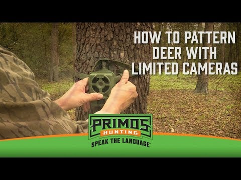 How to Pattern Deer With Limited Cameras video thumbnail