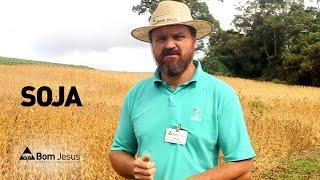 Carlos Klenki apresenta o campo experimental de soja da Cooperativa Bom Jesus
