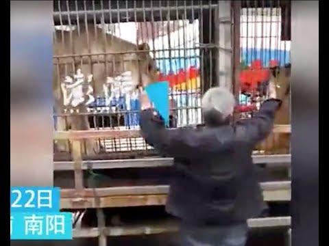 Цирковой тигр едва не откусил мужчине руку
