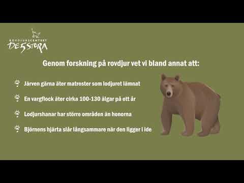 En kort film om rovdjursforskning