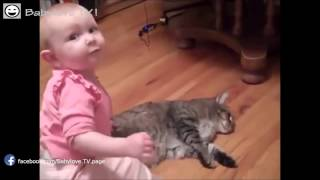 Sevimli Kedi ve Komik Bebek Videoları 2017