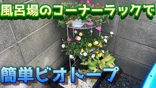 めだかのビオトープお風呂場のコーナーラックを使って簡単なメダカのビオトープbiotopeaquariumsetup.