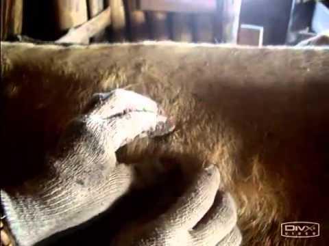 Как сдать мазок на яйца глист