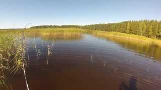 Озеро пионерское ленинградской области для рыбалки