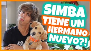 Daniel El Travieso - Hay Una Nueva Mascota En Casa.