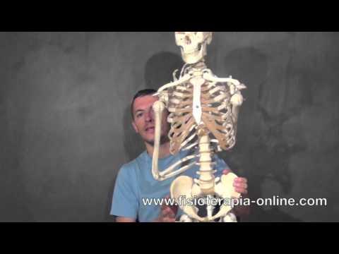 Osteocondrosi Trattamento riscaldamento unguento