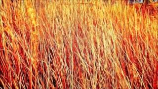 """Pavel Markelov """"Symphony No.7 ~ Khodynka"""""""