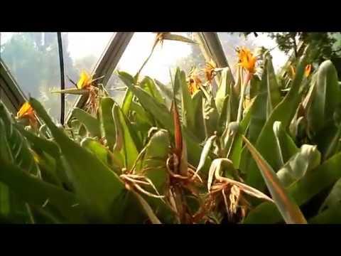 HHU - Flug durch Kuppel-Gewächshaus Botan. Garten der HHU