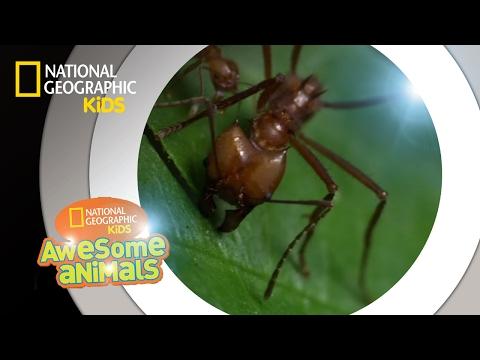 Human papillomavirus infection strains