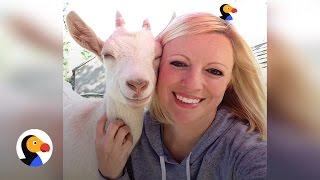 Woman Dedicates Life To Saving Baby Goats | The Dodo