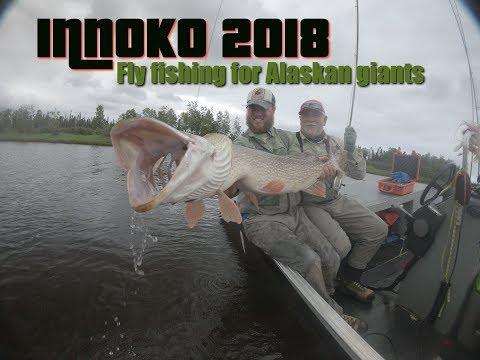 Innoko 2018, fly fishing for monster pikes