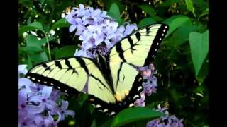 Butterfly James Blunt