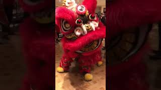 Chan Neill Solicitors 三喜临门CNY 2019 Reception