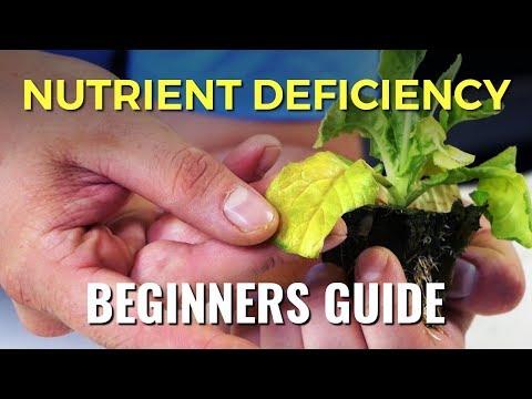 A Beginners Guide: Nutrient Deficiency