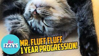 Mr. Fluff Fluff's 1 Year Progression! (WARNING: CUTE OVERLOAD)