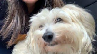 Adopting A Dog During Quarantine!
