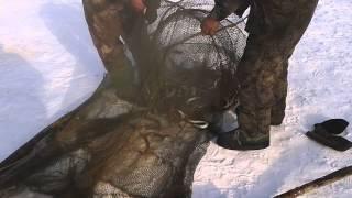 Ловля миноги на амуре зимой