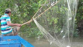 Cá ăn mạnh rồi, tranh thủ hốt cá lên xuồng thôi. Dạo này ngon | Săn bắt SÓC TRĂNG |