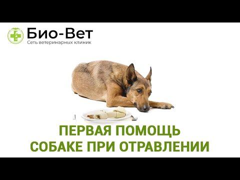 Первая помощь собаке при отравлении 💉/ Био-Вет