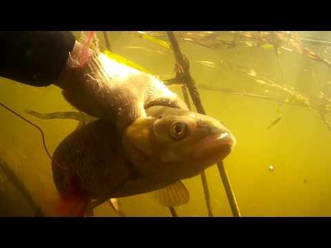 подводная охота лещ голавль из засидки