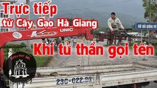 Đang cưa cây Gạo gây chết người ở Hà Giang