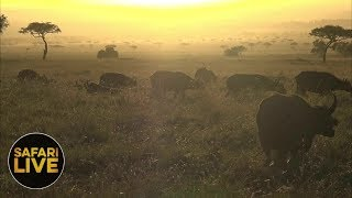 safariLIVE - Sunrise Safari - September 9, 2018