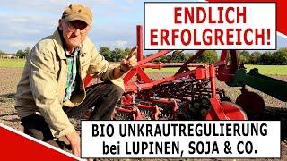 Erfolgreiche Unkrautregulierung bei Bio Lupinen, Soja, Erbsen und Ackerbohnen mit der Frühhacke!
