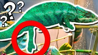 WHATS WRONG WITH KARMA MY CHAMELEON?? | BRIAN BARCZYK