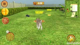 crazy cat vs mouse 3D game rewiew android//