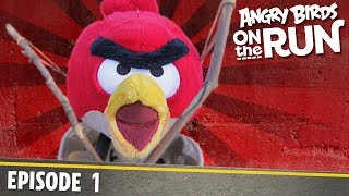 Angry Birds On The Run | On The Other Side   S1 Ep1