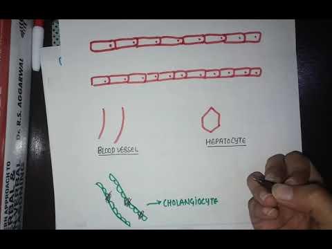 paraziták a gesztenyén pinworm eltávolító gyógyszerek